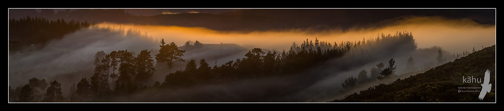 Misty sunrise Kaitoke  -  P11