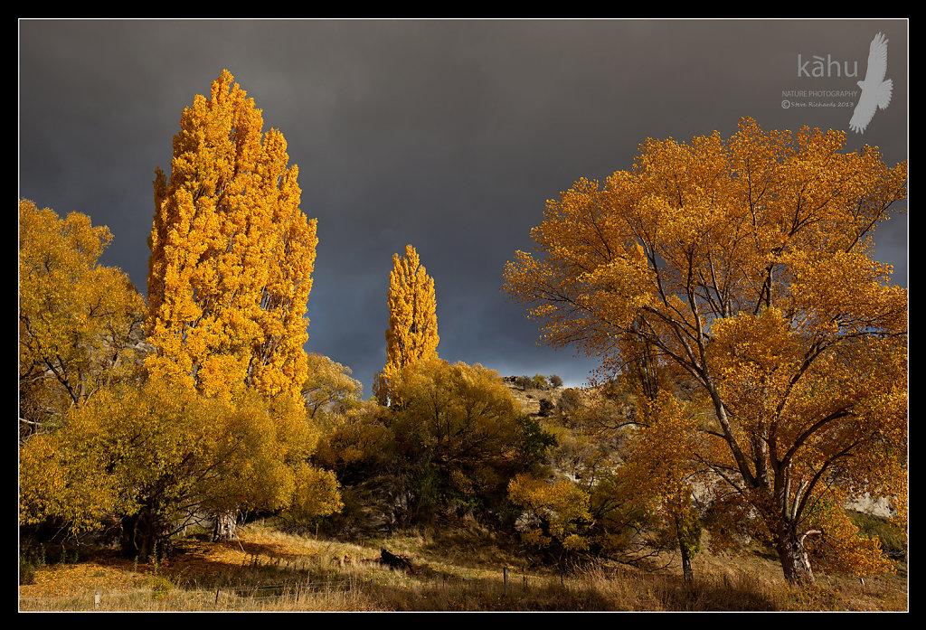 Autumn colours Central Otago  -  L29