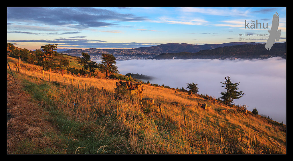 Over looking Dunedin early morning  -  L37