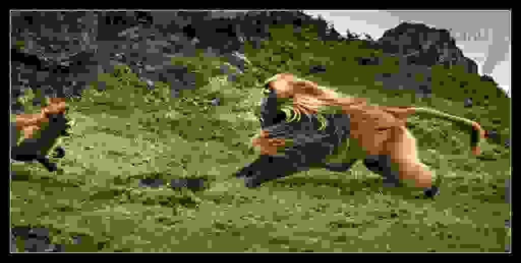 Gelada-Baboon-attack1.jpg