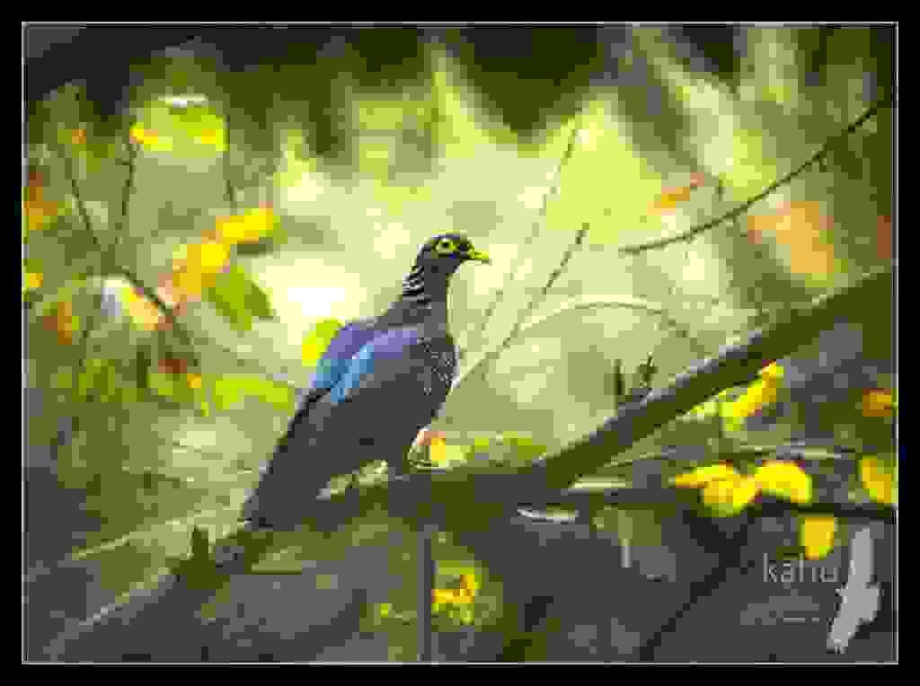 African-Olive-Pigeon.jpg
