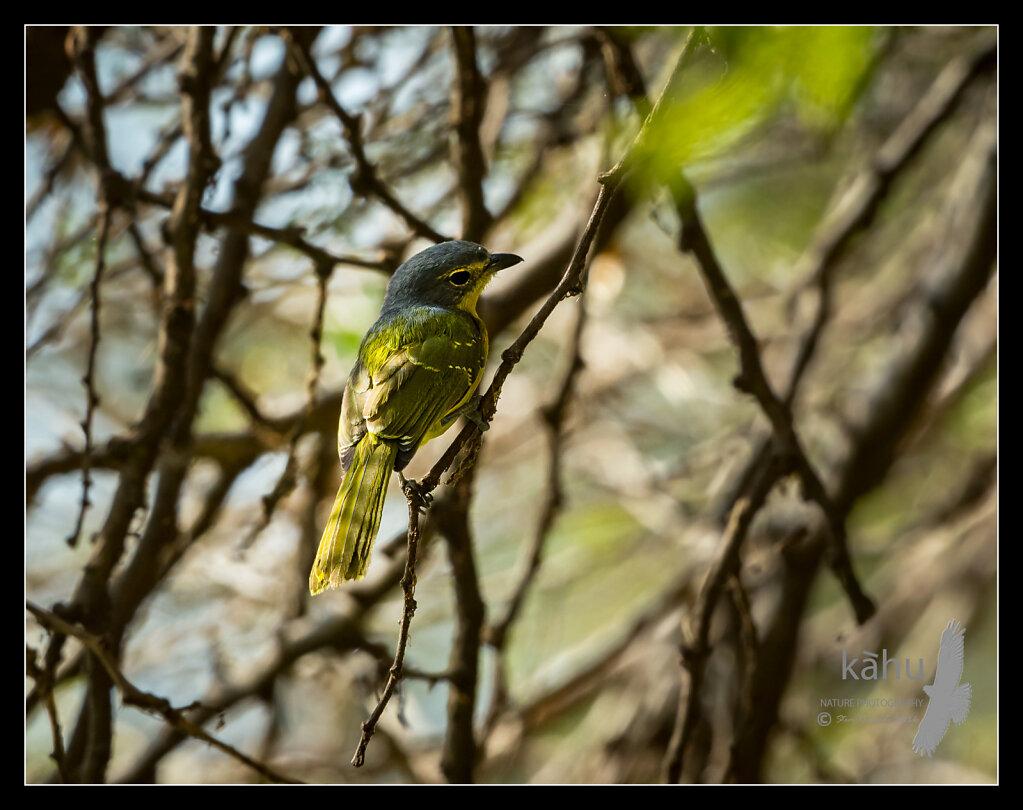 bird14.jpg