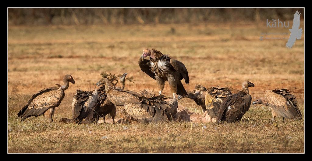 Vultures.jpg