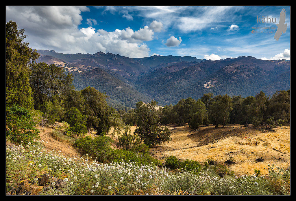 Looking-up-to-the-Bale-Mountains.jpg