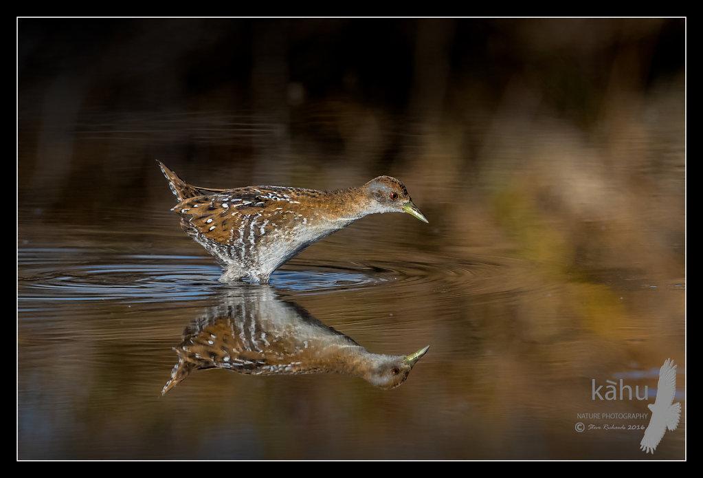 Marsh Crake evening reflection