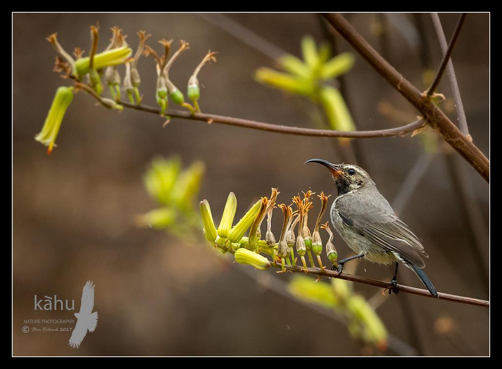 Sunbird4.jpg