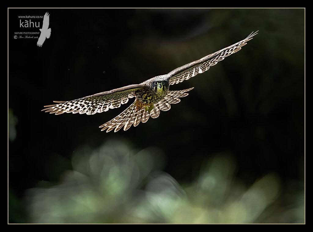 A backlite NZ Falcon in flight